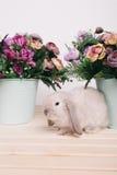 小的逗人喜爱的装饰兔子 免版税库存图片