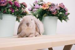 小的逗人喜爱的装饰兔子 图库摄影