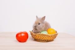 小的逗人喜爱的装饰兔子 库存照片