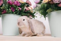 小的逗人喜爱的装饰兔子 免版税图库摄影