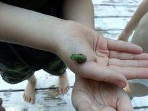 小的青蛙在儿童的手上 库存图片