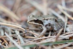 小的青蛙在森林里 库存照片