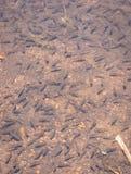 小的鱼许多在湖 免版税库存照片