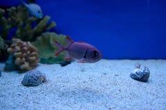 小的鱼 库存图片