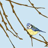 小的鸟唱歌曲。 无缝的纹理。 免版税图库摄影