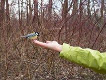 小的鸟坐手 免版税库存照片