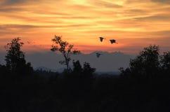 小的鸟早晨飞行在黎明下光  库存照片