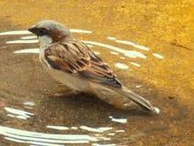 小的鸟游泳 库存图片