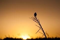 小的鸟的剪影 免版税库存图片