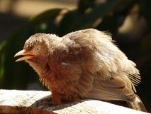小的鸟 免版税库存照片