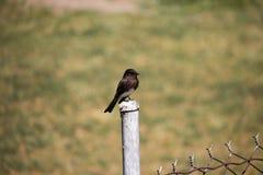 小的鸟 免版税库存图片