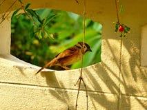 小的鸟 库存图片