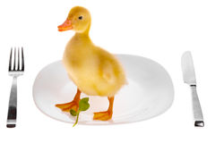 小的鸭子 免版税库存图片