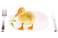 小的鸭子 库存图片