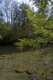 小的鸽子河春天 库存照片