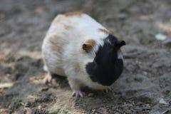 小的鼠标 免版税图库摄影