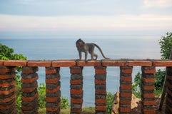 小的婴孩猴子在Uluwatu 图库摄影