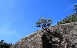 小的结构树 库存图片