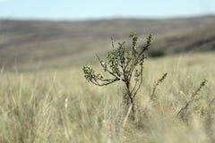 小的结构树 图库摄影
