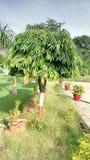 小的结构树 免版税库存照片