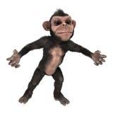 小的黑猩猩 免版税库存图片