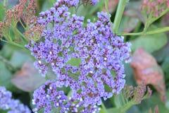 小的紫罗兰色花 免版税库存图片