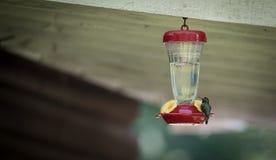 小的绿色蜂鸟 库存照片