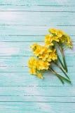小的黄色黄水仙在木的绿松石开花被绘 图库摄影
