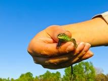 小的绿蜥蜴在手上 免版税图库摄影