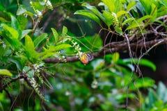小的蝴蝶在庭院里 免版税库存图片