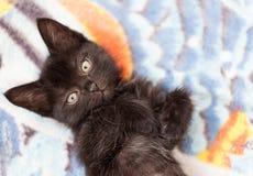 小的黑逗人喜爱的小猫在床上躺 免版税库存图片