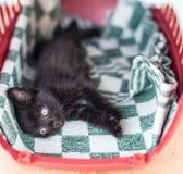 小的黑逗人喜爱的小猫在床上躺 免版税库存照片