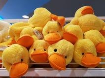 小的阴郁的鸭子 免版税库存照片