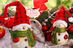 小的仓鼠请求圣诞节礼物 免版税库存图片