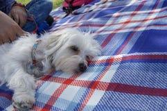 小睡在野餐 库存图片