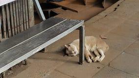 小睡在长凳下的懒惰猫 免版税图库摄影