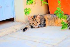 小睡的城市猫 库存图片