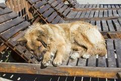 小睡的狗 免版税库存照片