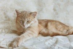 小睡米黄幼小的猫 库存图片