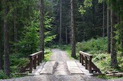 小短的河上的桥驾驶的汽车在森林中间 库存照片