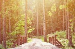 小短的河上的桥驾驶的汽车在森林中间 免版税库存照片