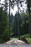 小短的河上的桥驾驶的汽车在森林中间 库存图片