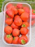 小篓草莓 库存图片