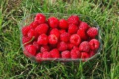 小篓莓 库存图片