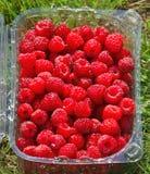 小篓莓 库存照片
