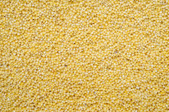 小米黄色五谷食物背景  库存图片
