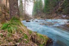 小粗砺的河在森林里 免版税库存图片