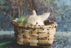 小糖果上色了在木篮子的兔子在阳光下与defo 免版税库存照片