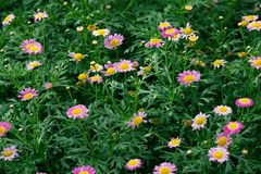 小紫色花在中部被留下 库存图片