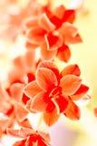 小红色花,自然 免版税图库摄影